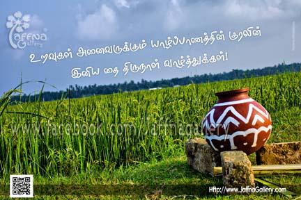 thai pongal wishes_jaffnavoice